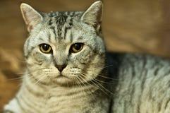 The cat's eyes. Stock Photos