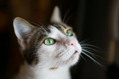 Cat's eyes Royalty Free Stock Photos