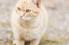 The cat's eyes Stock Photo