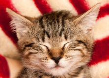 Free Cat S Face Stock Photography - 17747762