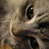 Cat's face. Photo of close up of a cat's face Royalty Free Stock Photography
