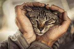 Cat's face. Cats's face in a big man's hands Royalty Free Stock Images