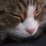 Cat's face closeup. Extreme closeup of a cat'face while sleeping royalty free stock photos
