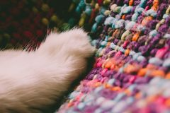 Cat`s feet. Paws of a white cat. Turkish Angora Royalty Free Stock Photos