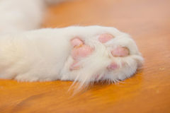 Cat's feet Royalty Free Stock Images