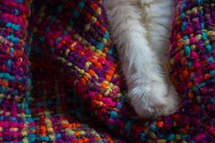 Cat`s feet. Paws of a white cat. Turkish Angora Royalty Free Stock Photography