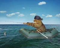 Cat`s fishing on a boat. The cat in a bandana is fishing on the inflatable boat in the sea stock images