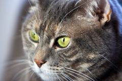 Cat's green eye Stock Images