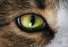 Cat`s green eye. Green eye of brown cat royalty free stock images