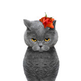 Cat's head decorated with beautiful rose. Isolated on white background royalty free stock photography