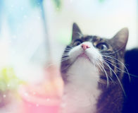 Cat 's head with a pink nose and mouth, close up Stock Photography