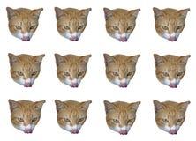 Cat`s head on white background stock photos
