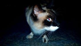 Cat& x27; s koszmar Obrazy Royalty Free