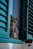 Cat's look. A cat, sitting on the window Stock Image