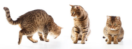Cat's motions. Different poses of striped cat isolated on white background Stock Photo