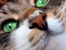 Cat`s muzzle. Cat`s muzzle close up. Ginger nose and green eyes Royalty Free Stock Photos