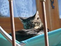 Cat`s nap stock photo