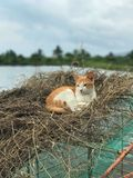 Cat`s nest Royalty Free Stock Images