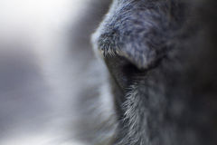 Cat's nose Royalty Free Stock Photography