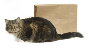 The Cat's Out of the Bag Royalty Free Stock Photography