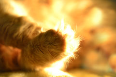 Cat's paw Royalty Free Stock Image