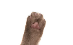Cat's paw isolated Stock Images