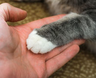 Cat's paw in a mans palm. friendship with pet Royalty Free Stock Photo