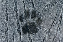 Cat paw print in the frost. A cat`s paw melted through the frost, leaving a print in the ice crystals one cold morning royalty free stock image
