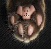 This is cat`s paw. There is a tattoo on a cat`s paw. The tattoo likes a smiling face stock photography