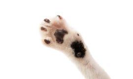 Cat's paw  Royalty Free Stock Photos