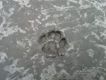 Cat`s Pawprint in Concrete Royalty Free Stock Photo