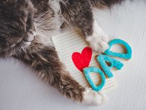 Cat`s paws, greeting card and word DAD stock images