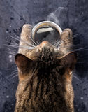 Cat`s paws hold a cup of hot black coffee. A gray cat bent over a cup of coffee with steam. Good morning. Cat`s paws hold a cup of hot black coffee. A gray cat Stock Photo