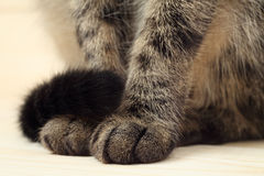 Cat's paws and tail Stock Photo
