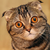 Cat's portrait Stock Photography