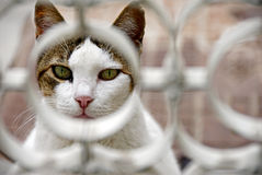 Cat's portrait. Cat looking through a lattice fence Royalty Free Stock Photography