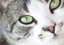Cat's portrait Stock Image
