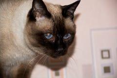 Cat`s portrait. Stock Image