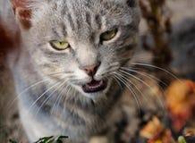 Cat's portret Stock Photo
