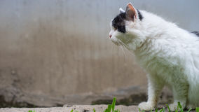 The cat's pose Royalty Free Stock Photo
