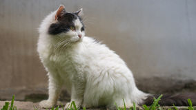 The cat's pose Royalty Free Stock Photography