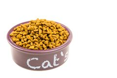 Cat`s purple eating purple bowl stock photo
