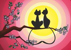 Cat's romance Stock Images