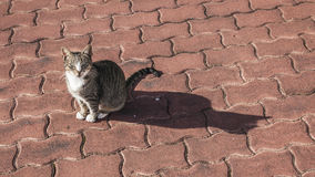 A cat and it`s shadow. Stock Images