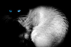 The cat's sight. Cat isolated on black stock image