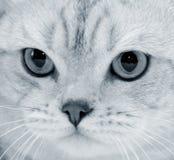 Cat's sight Royalty Free Stock Photos