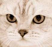 Cat's sight Stock Images
