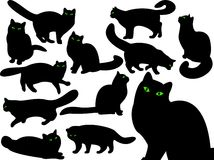 Cat's silhouettes with eyes. Royalty Free Stock Image