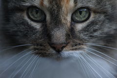 A Cat's Stare Stock Photo
