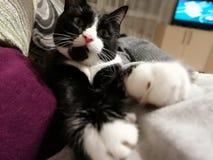 Cat& x27; s tafsar arkivbilder